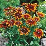 13 loại hoa xứng đáng mọc trong khu vườn nhà bạn trong mùa thu này