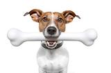 Chó bị hóc xương và 3 giải pháp sơ cứu ngay tại nhà